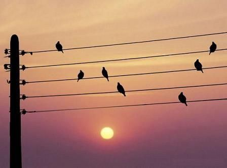 La nature qui nous entoure peut-elle devenir musique?